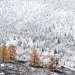 Чибитское ущелье. Первый снег и желтые лиственницы - это было незабываемым зрелищем...