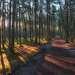 Запад: Лес на балтийском побережье. Куршская коса, Калининградская область.