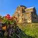 Цветёт морозник на фоне Бедийского собора (10 век).село Агу - Бедиа. Начало марта.