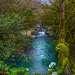 Весенняя река, цвет воды от талого льда в горах.  Цветёт толстостенка. Начало марта.