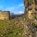 Фиалки цветут на стене на фоне развалин княжеского дома около Бедийского собора (10 век).село Агу - Бедиа. Начало марта.