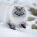 Невская маскарадная в снегу.