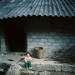 Crying baby at Pho Cao, Dong Van, Ha giang.