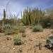 Пустыня Сонора — одна из самых красивых пустынь Земли. Красоту эту создает своеобразный рельеф, мягкий климат, необычная для пустыни растительность: самые различные формы деревьев, кустарников, многолетние и однолетние травы, разнообразные кактусы. Субтропическая пустыня Сонора лежит на западе Северной Америке, в США и Мексике. Площадь пустыни составляет 355,342 кв. км. Пустыня окружена горами, которые поднимаются полого или резко у ее границ. Значительная часть пустыни (около 25% поверхности) занята небольшими возвышенностями, встречаются в пределах пустыни и горы.