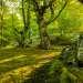 Одно удовольствие находится в таком лесу утром, наслаждаясь шелестом листьев и пением птиц.