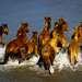 Лошадки здесь находятся все теплые месяцы годы. Они спасаются от жары, и отыскивают сочную траву.