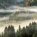 Foggy morning in Carpathian mountains