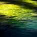 Здесь досточно богатая подводная флора.