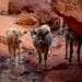 Скалы состоят из пластов красного песчаника.