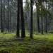 Пойдёшь налево — просто лес,