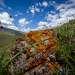 Природа Джунгарии очень красивая, места здесь малообитаемые, как, к примеру, плато Сарыгер. На него можно подняться только верхом на лошади, или на вертолете.