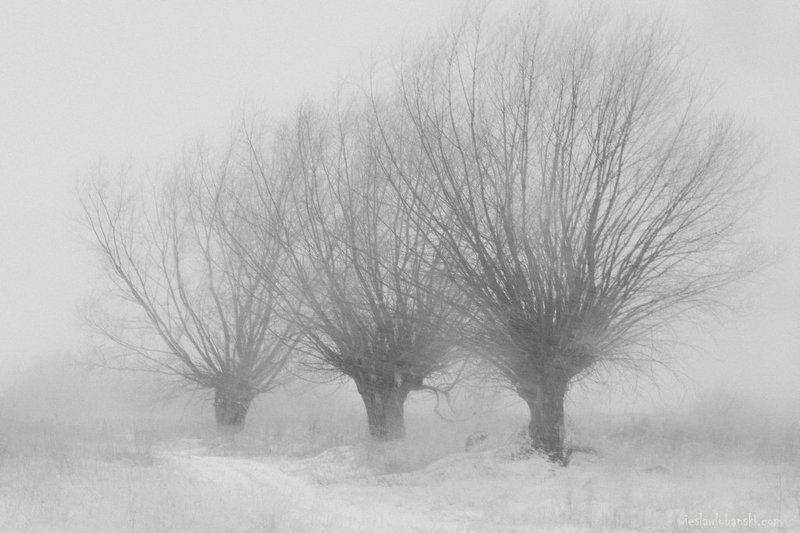blizzard in the blizzardphoto preview