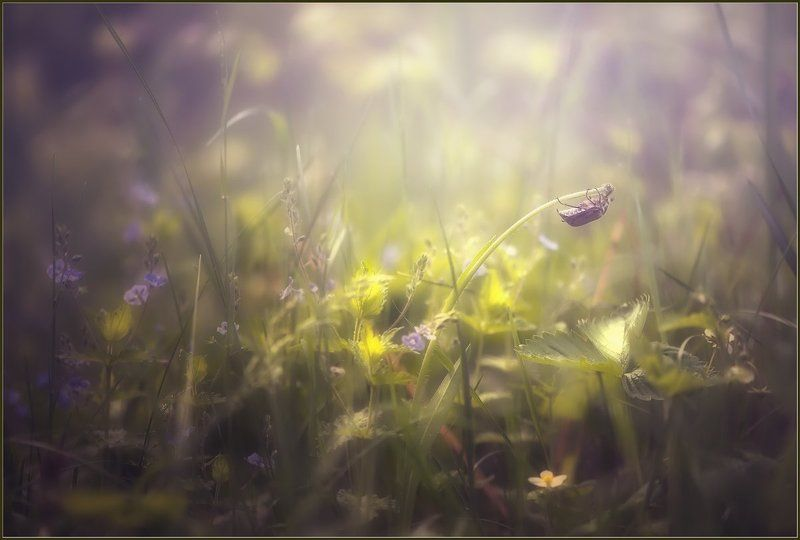 Про жука.photo preview