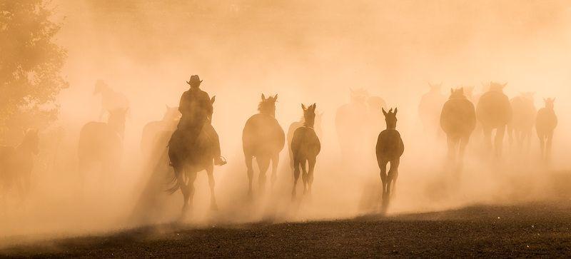 кони,лошади,пыль,табун Уходящая натураphoto preview