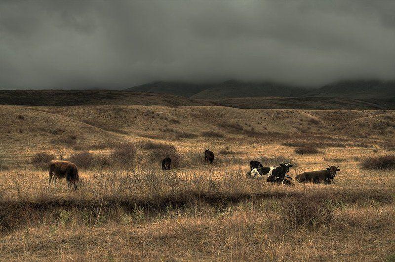Про коров которые попали в очень неприятные погодные переделки.photo preview