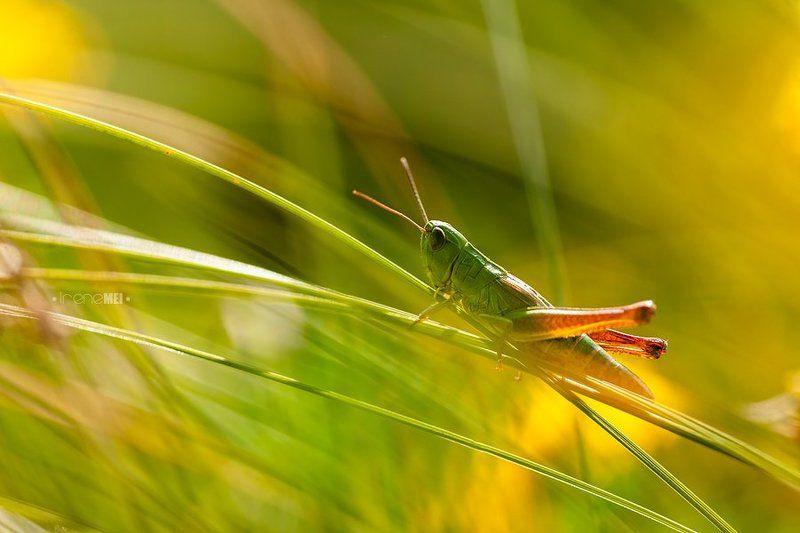 В траве сидел кузнечикphoto preview
