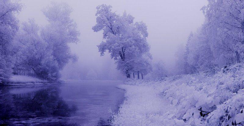 infrared, туман, парк, рассвет,, лето ~109~photo preview