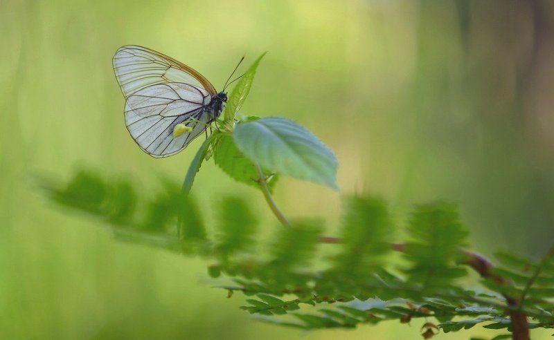 Смутные воспоминания бабочки о прошлых метаморфозахphoto preview