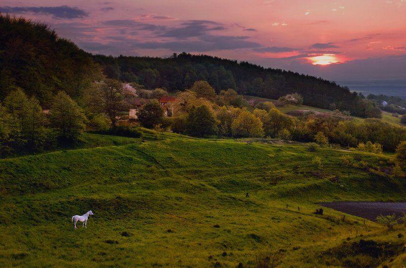 Вечер, Закат, Лошадка Про белую лошадку и уходящий деньphoto preview