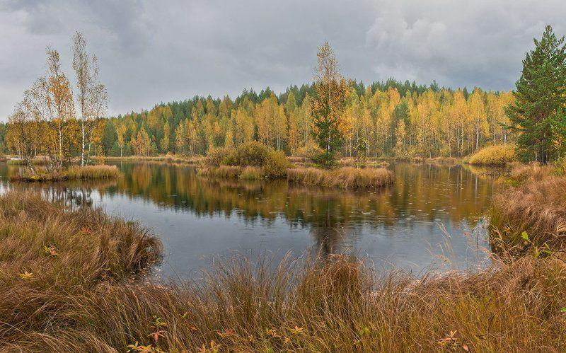 Болото, Дождь, Осень, Панорама, Пейзаж Панорама осеннего болота снятая в разные фазы дождяphoto preview