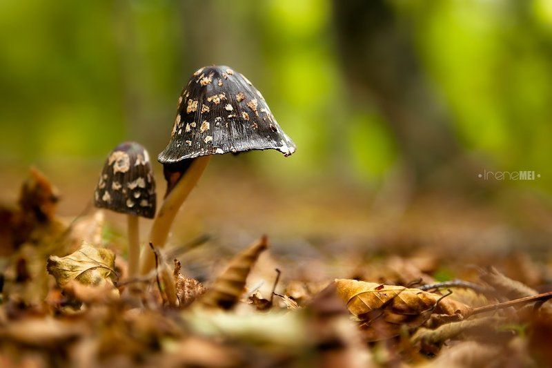Осенние грибочкиphoto preview