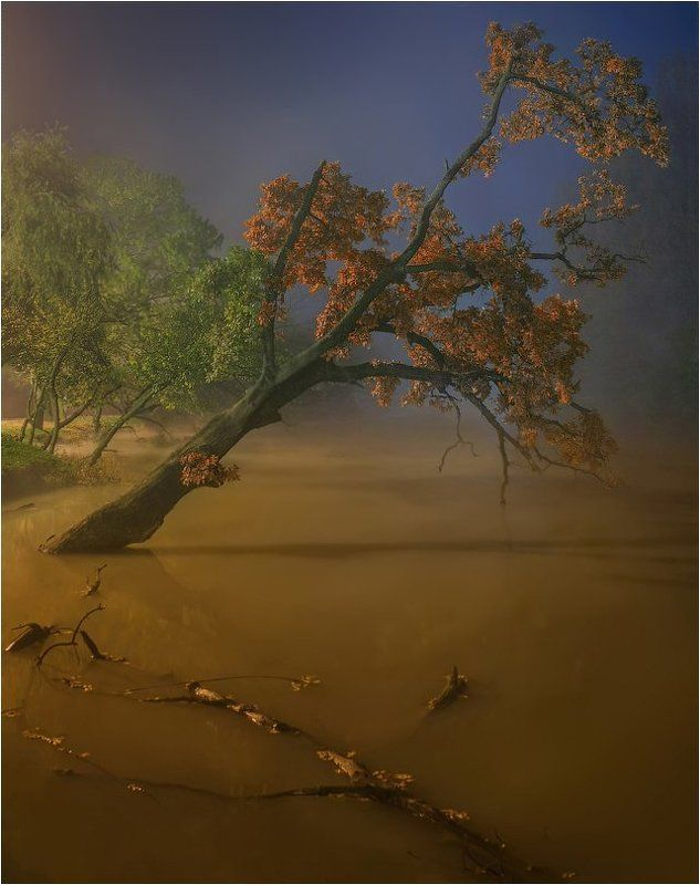 Осень, Река, Туман ***photo preview
