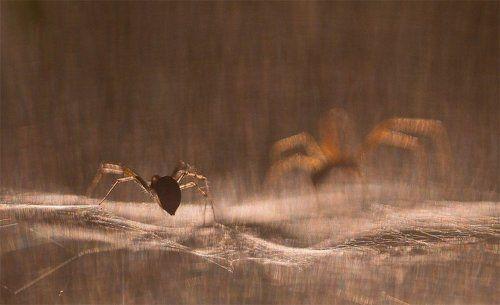 Фантазии стеснительного паука...