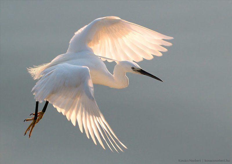 Bird, Nature, Wildlife Norbert Kovácsphoto preview