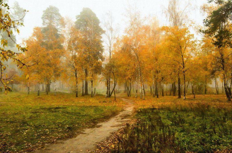 осень, лес, туман, деревья Осенние зарисовкиphoto preview