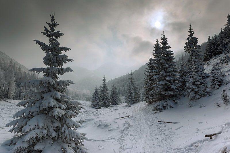 Прошлогодний снег.photo preview
