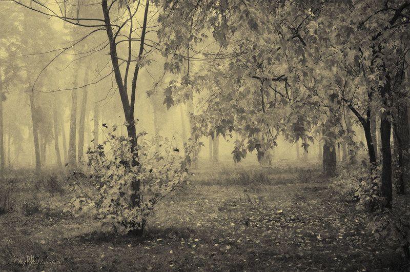 Деревья, Лес, Осень, Туман, Чб, Ч\\б Нецветная осеньphoto preview