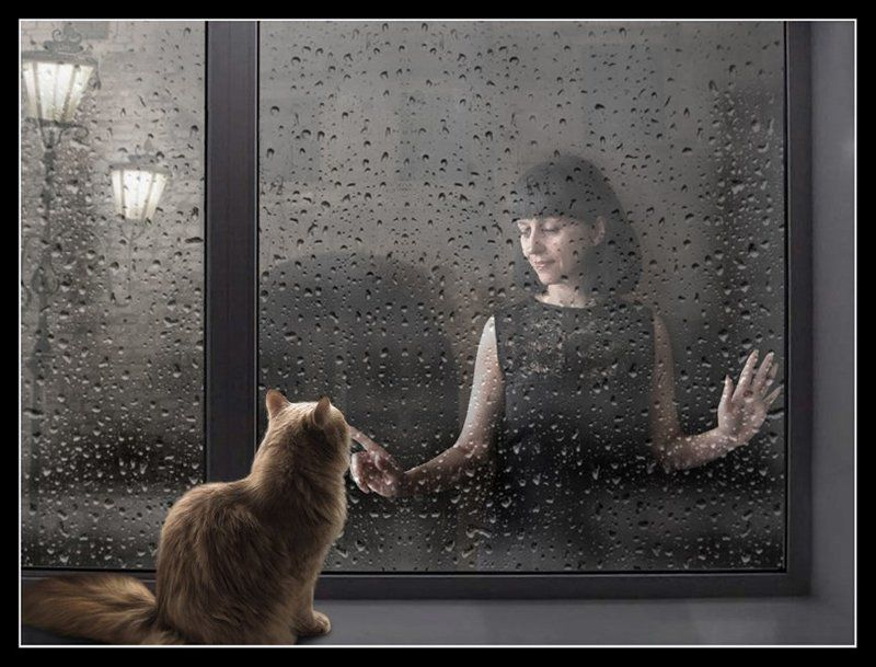 Дождь окно, Кошка Дождь...photo preview