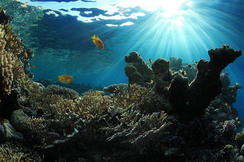 Утро на домашнем рифе.photo preview