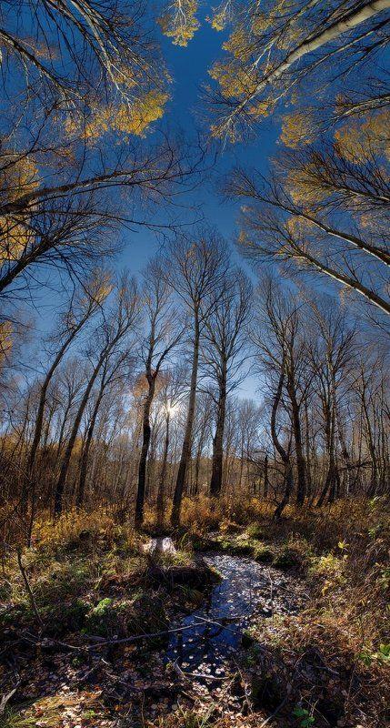 Осеннее Головокружениеphoto preview