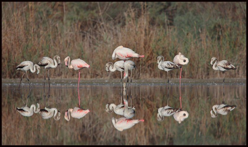 Когда фламинго немного грустноphoto preview