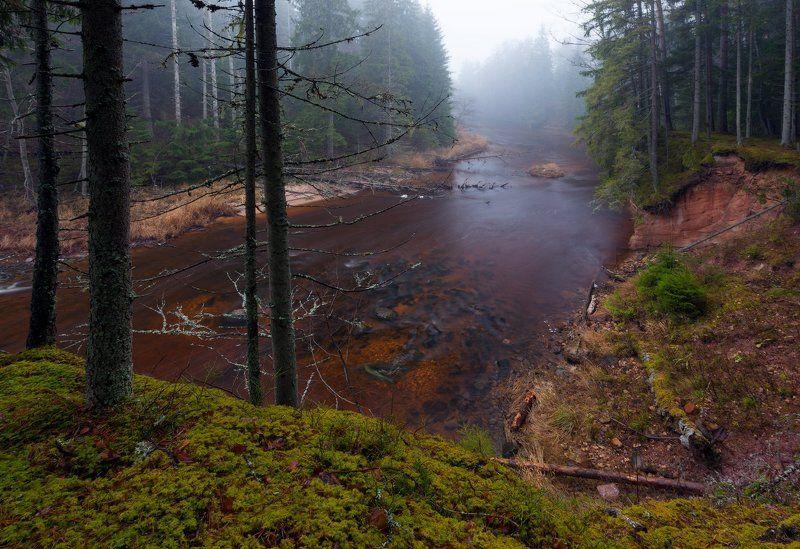 ноябрь, туман тихим серым ноябрьским днемphoto preview