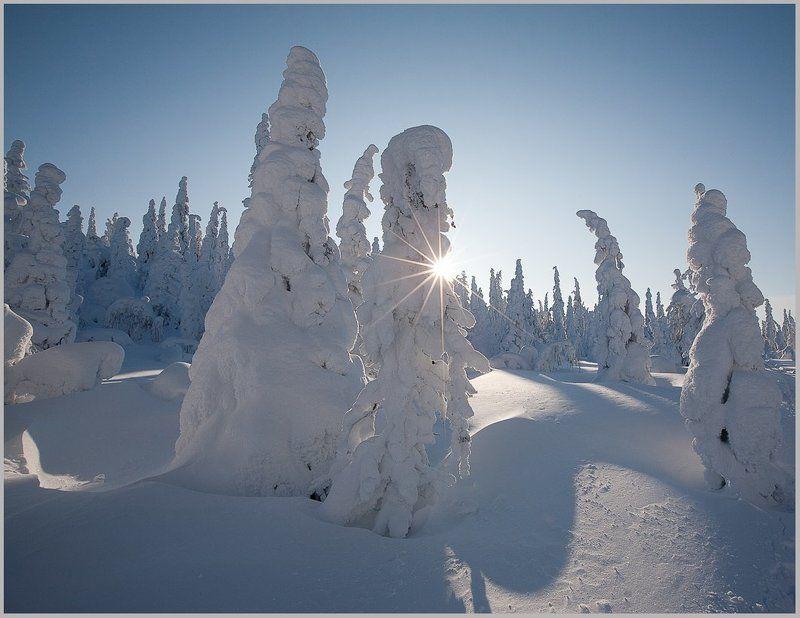 Карелия. Звёздочка зимы.photo preview