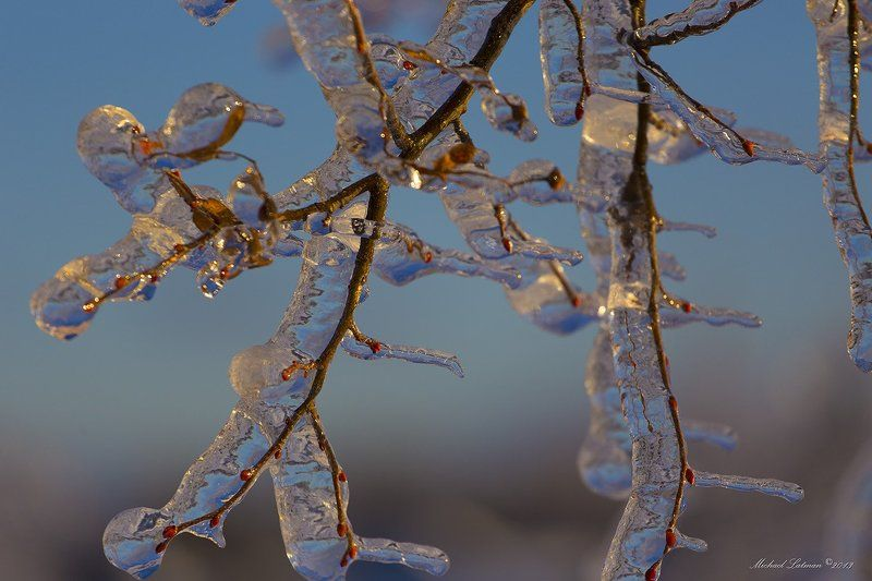 Ice, Sunset, Tree, Winter It\'s winter time!photo preview