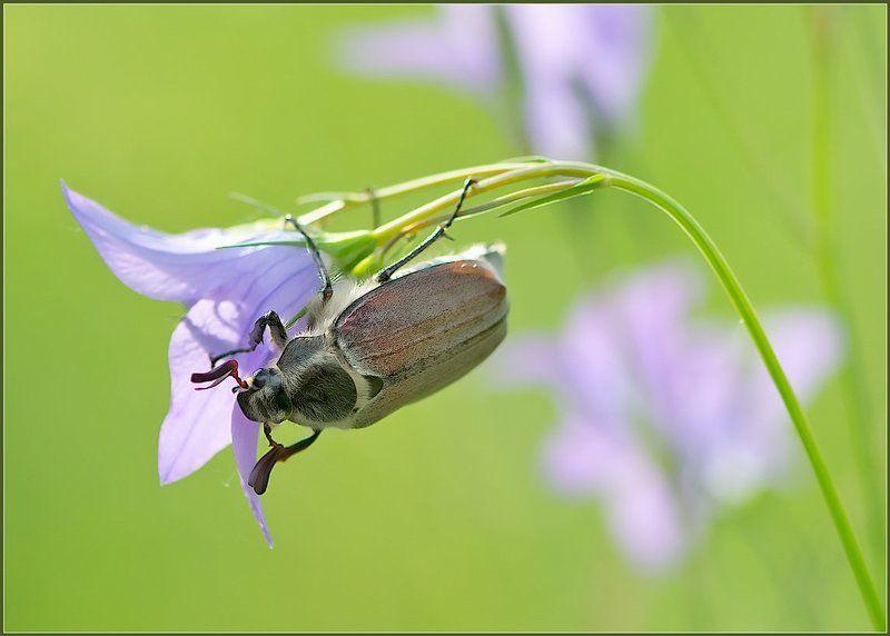 Про жука и колокольчик.photo preview