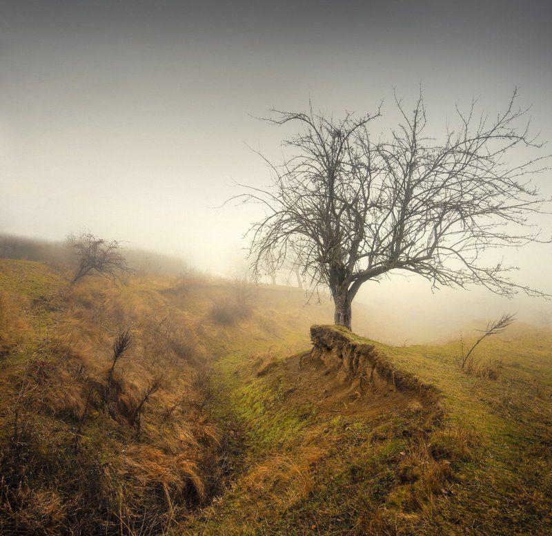 дерево в  овраге 2photo preview