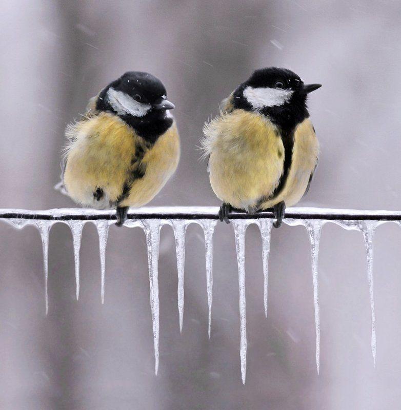 птицы, синицы Ожиданиеphoto preview