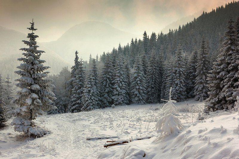 В лесу родилась елочка...photo preview