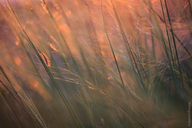 Вечер, Муравьиный лев, Степь Вечернее очарование степиphoto preview