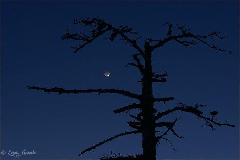 Молодая луна и мертвое деревоphoto preview