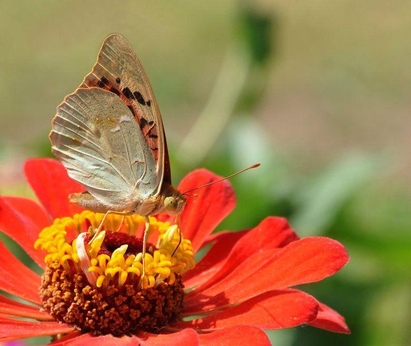 Краски лета...photo preview