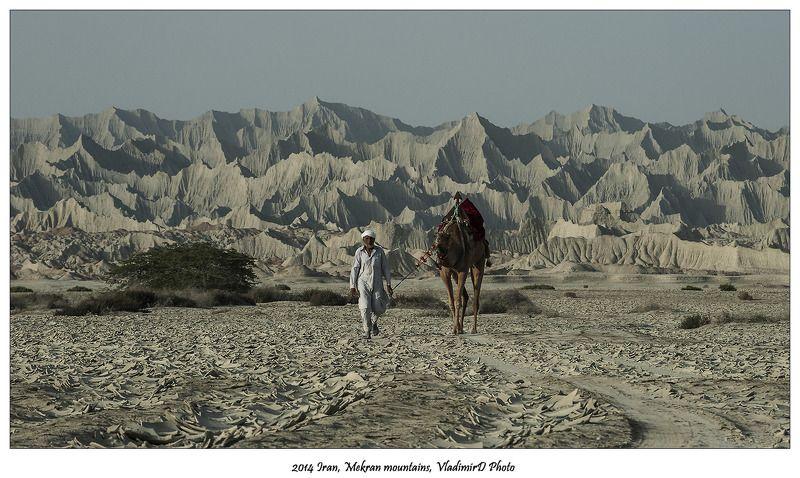 Верблюды, Иран, Мекран Но мы идем вслепую в странных местах, И все, что есть у нас - это радость и страх...photo preview