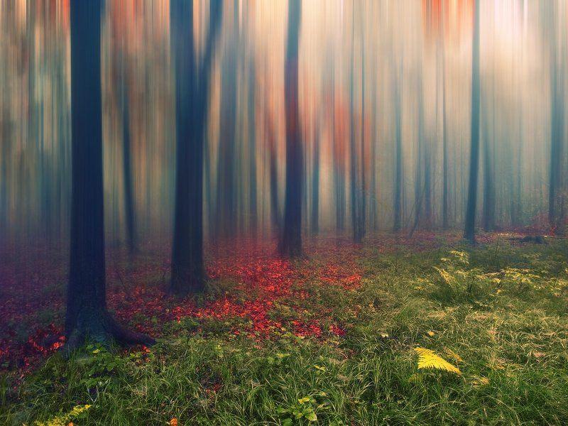Графика лесаphoto preview