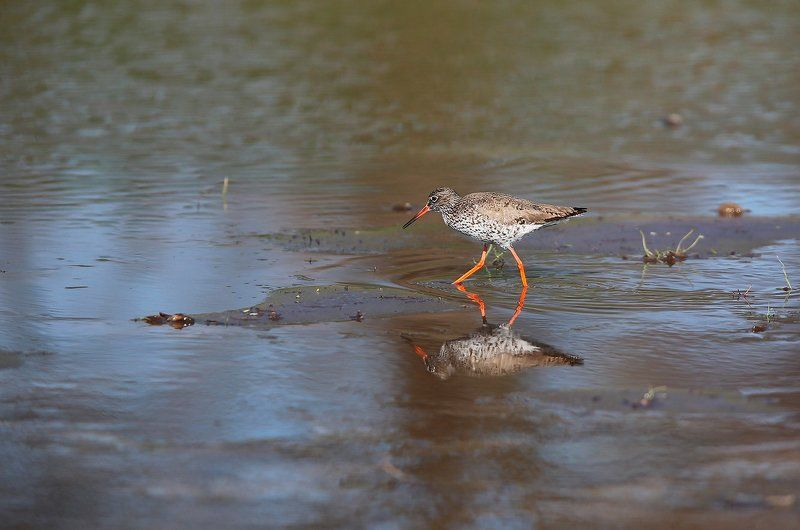 Не всяк тот,кто хвалит свое болото,есть кулик...photo preview