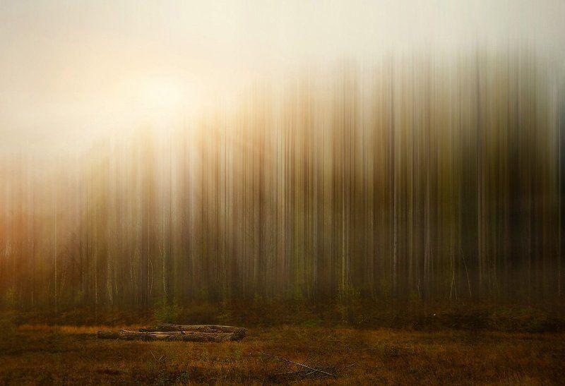 Иногда мне снится утро в лесуphoto preview