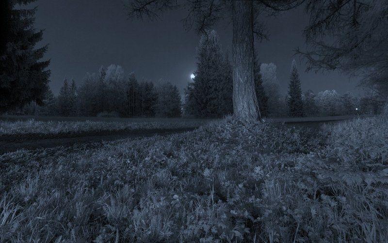 infrared, весна, длинная выдержка, ночь, парк, полнолуние, световая кисть ~121~photo preview